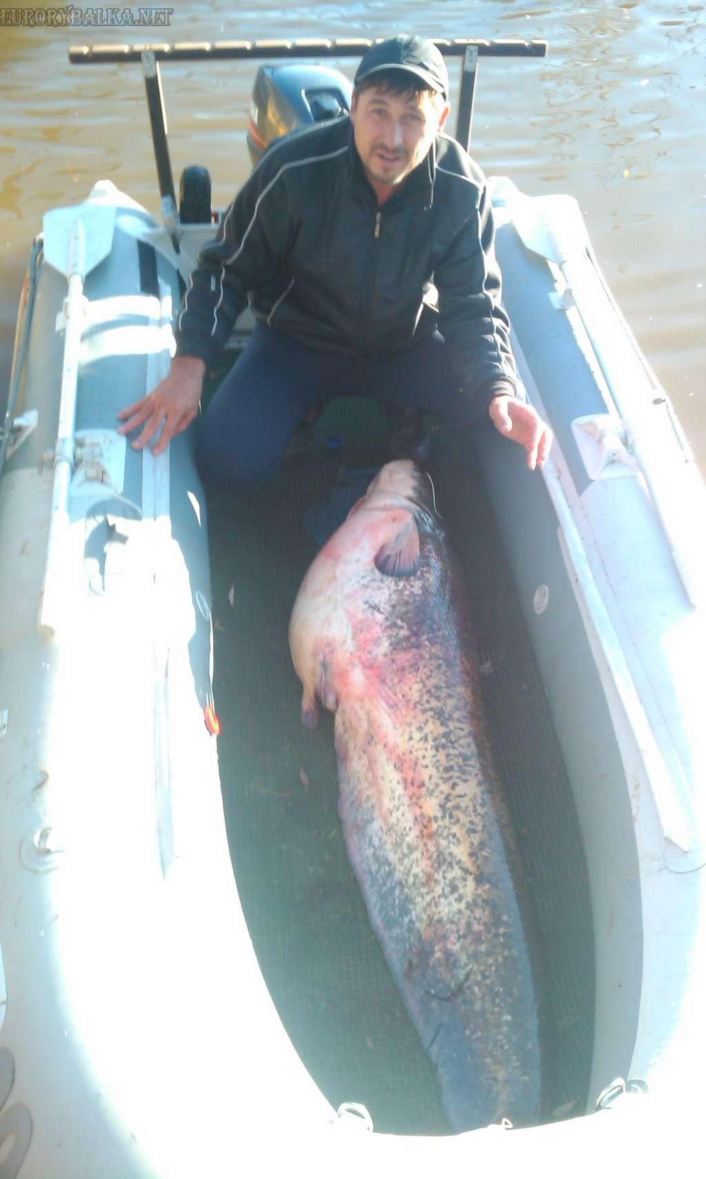 Сом на 42 кг